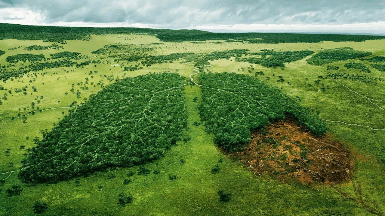 Лесозащитные мероприятия